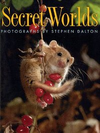 Secret worlds, photographs, Stephen Dalton